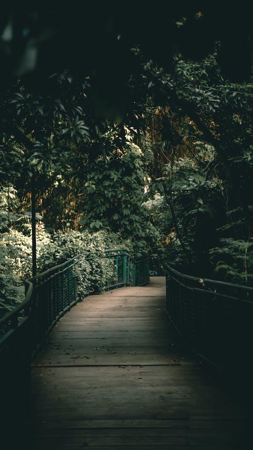 Free stock photo of amusement park, arch bridge, arches national park, ballpark