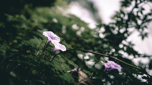 Free stock photo of artificial flowers, beautiful flowers, bokeh, climbing plant