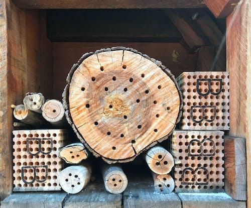 Foto profissional grátis de abelha, carvalho, colmeia de abelhas, hotel
