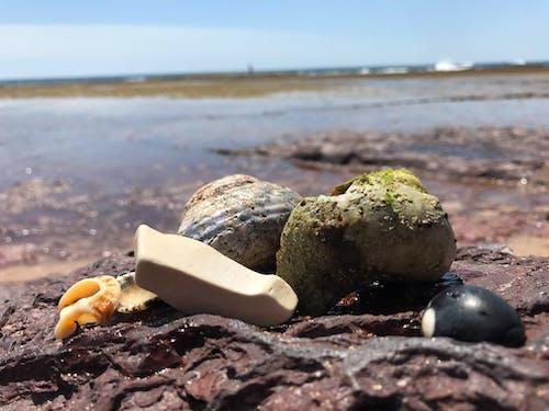 Foto profissional grátis de concha do mar, concha marinha, conchas do mar, conchas marinhas