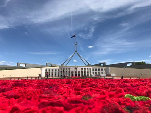 Free stock photo of australia, parliament, red, red roses