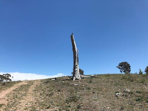 Foto profissional grátis de árvore, árvore nua, céu azul, céu de brigadeiro