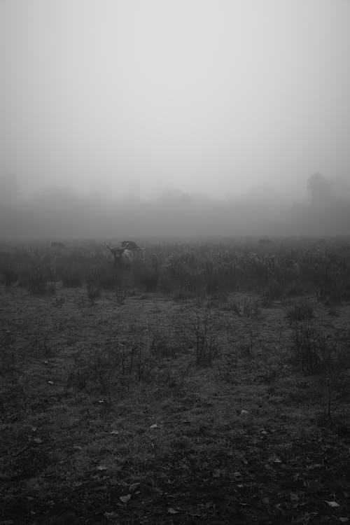 Free stock photo of black and white, cow, dark