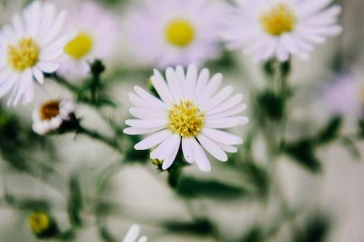 Kostenloses Stock Foto zu natur, blumen, sommer, garten