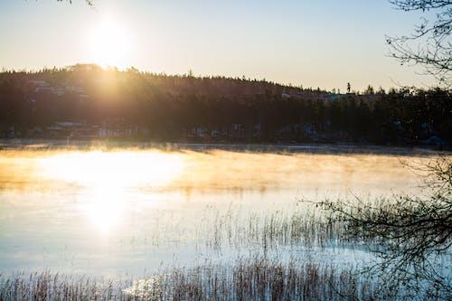 Free stock photo of fog, forest, lake, sunrise