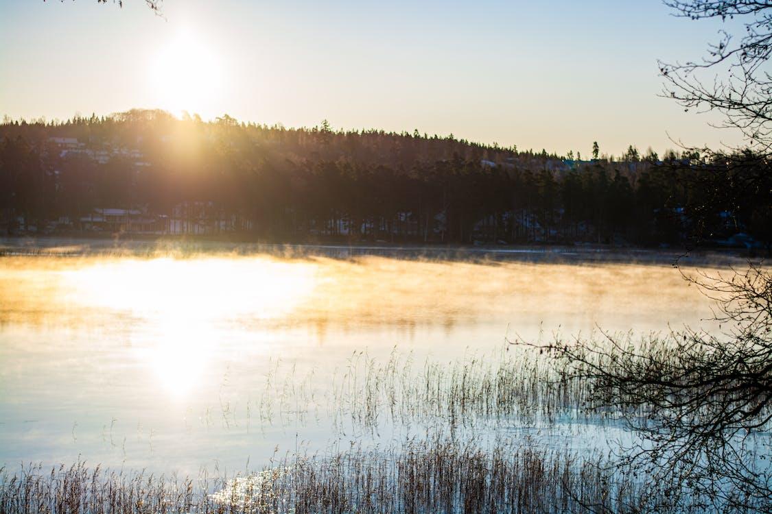 fog, forest, lake