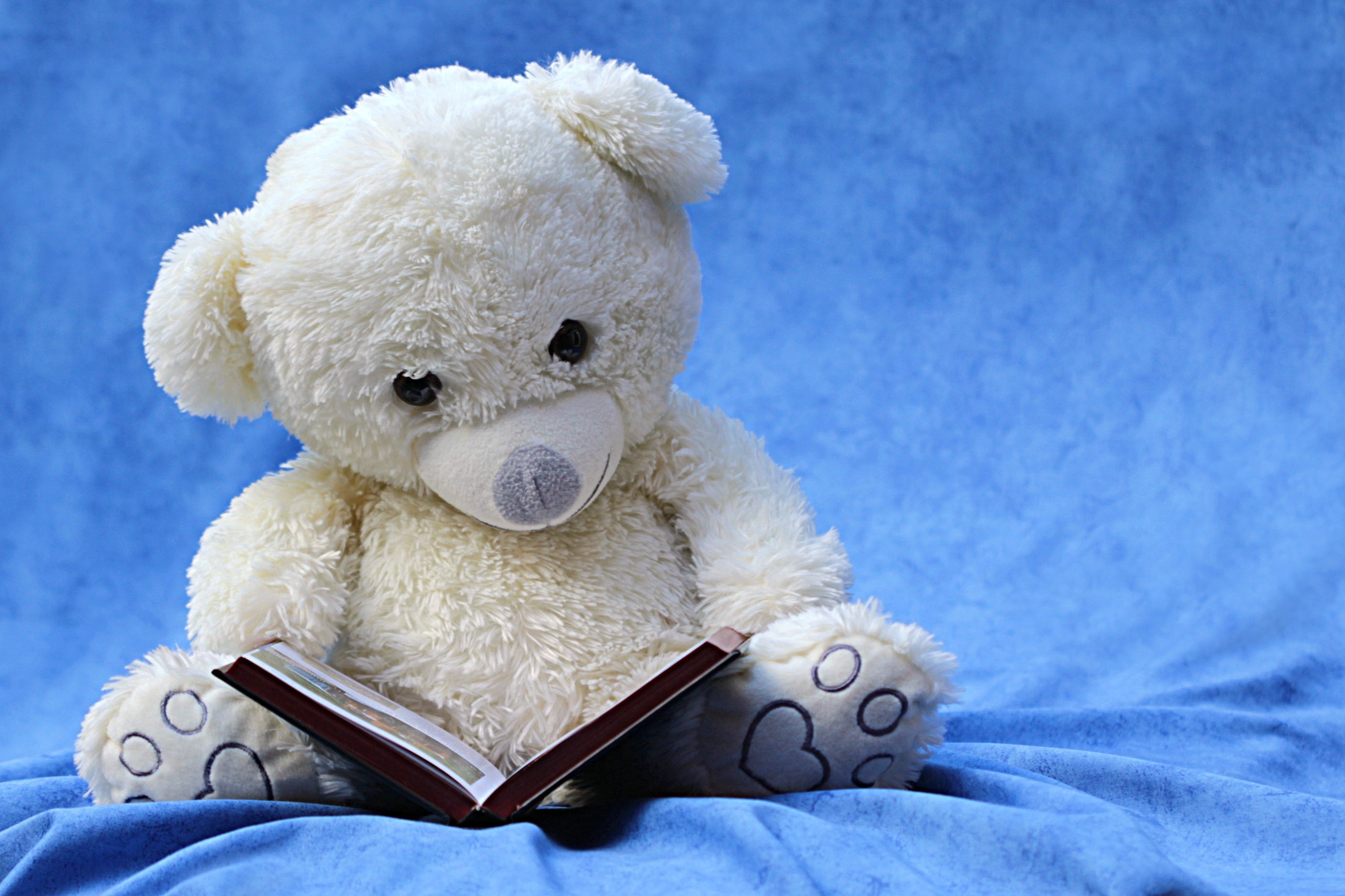 white teddy bear reading book free stock photo