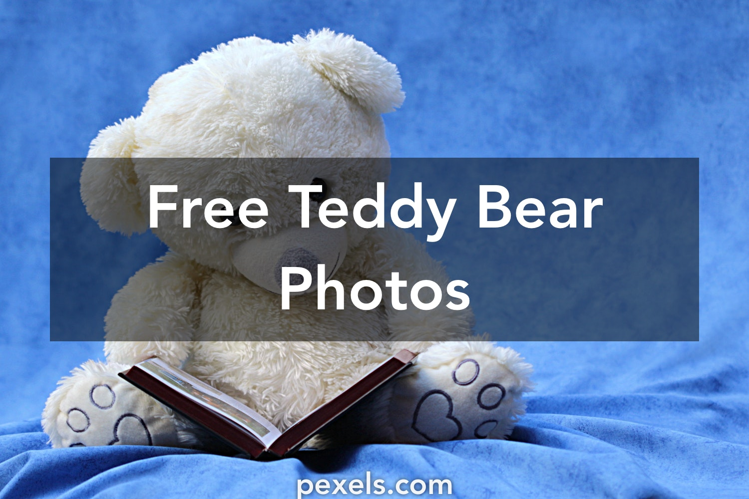 100 interesting teddy bear photos · pexels · free stock photos