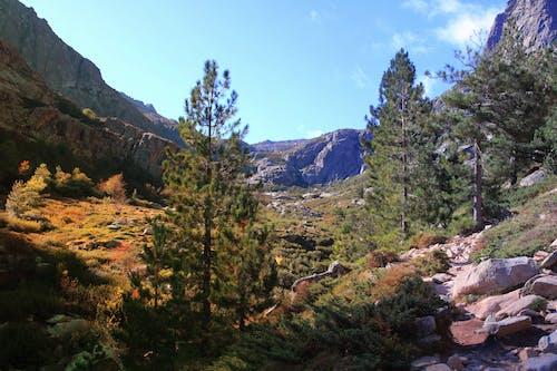 คลังภาพถ่ายฟรี ของ # # ภูเขาต้นไม้ # # ฉากภูเขา