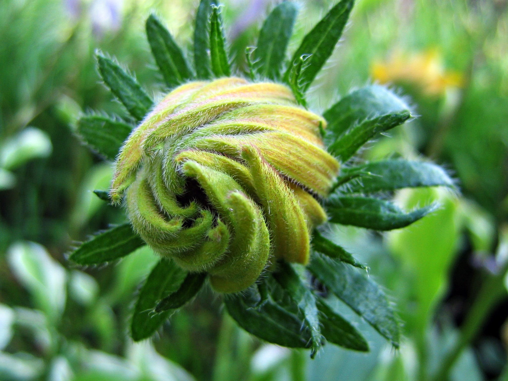 bud, closeup, flora
