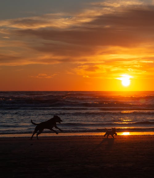 Immagine gratuita di alba, cane, cane che cammina, cane che corre