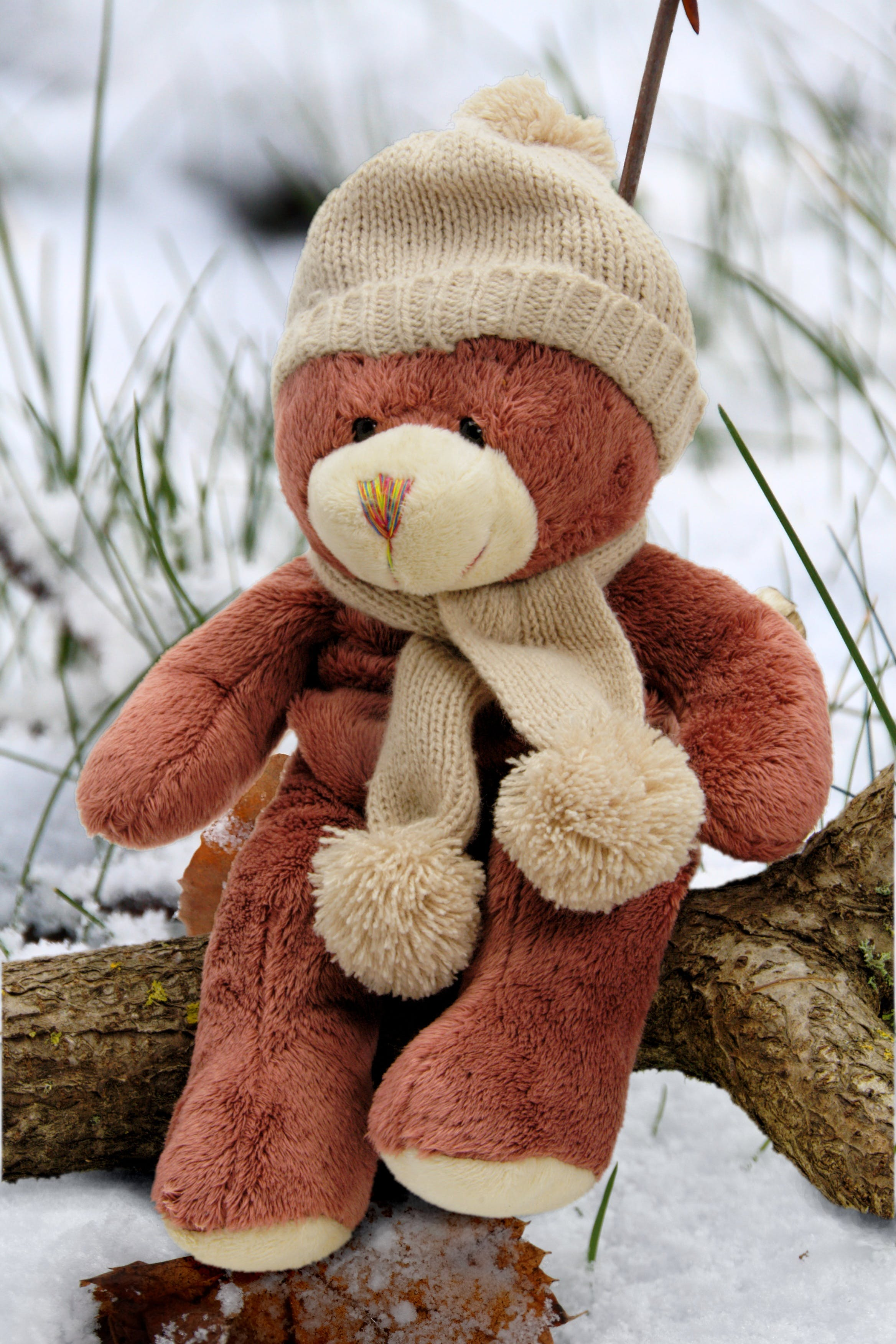 Beige and Brown Bear Plush Toy on Brown Branch during Day Time