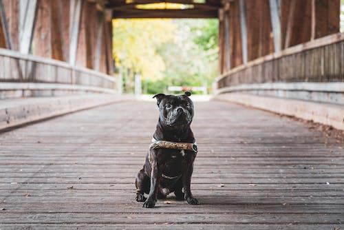 Photo Of Black Dog Sitting On Wooden Bridge
