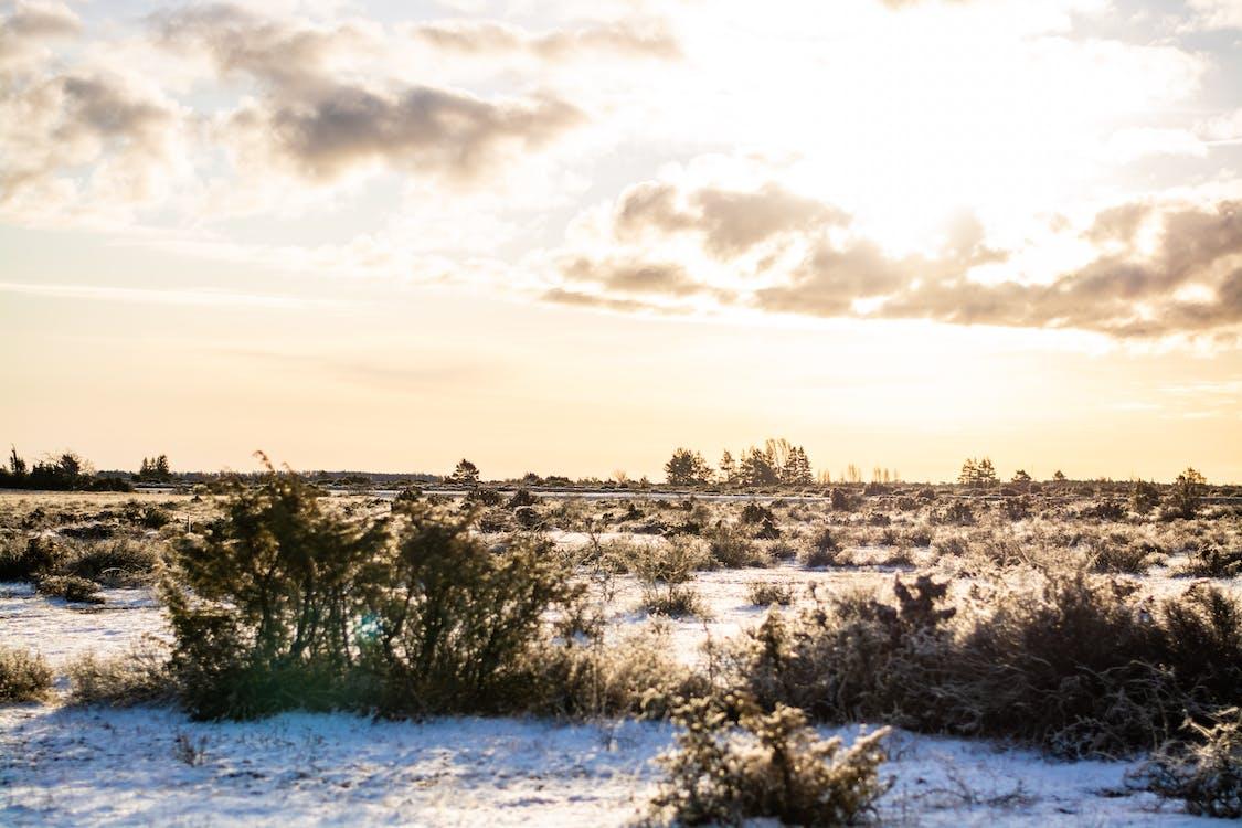 cloudy, frost, landscape