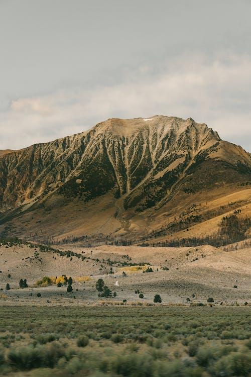 Photos gratuites de à distance, arbre, aube, automne
