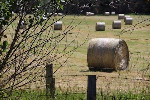 Free stock photo of hay bales