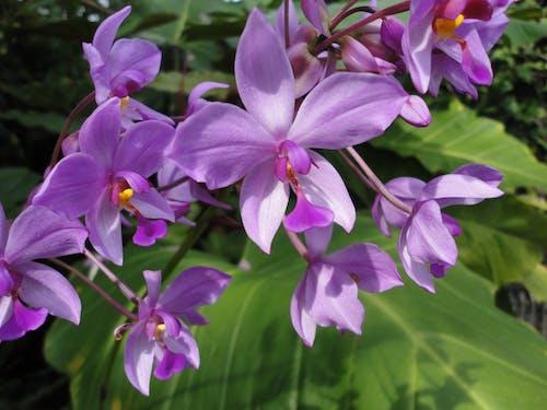 Free stock photo of purple flowers