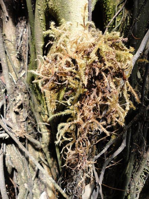 Free stock photo of tree moss texture