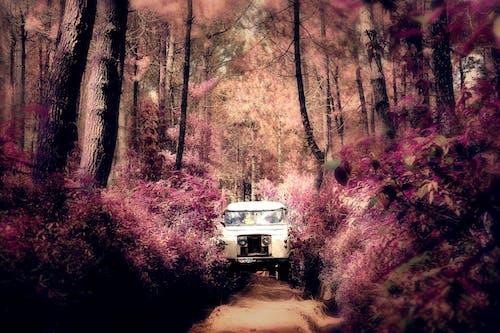 Бесплатное стоковое фото с cikole, бандунг, джип, джунгли