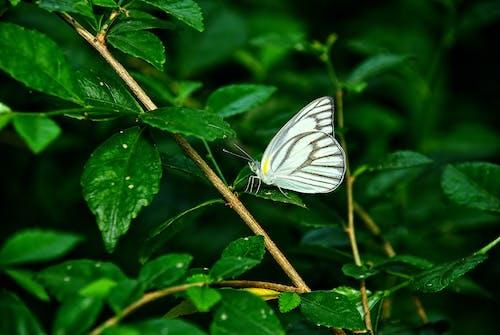 Бесплатное стоковое фото с бабочка, жуки, природа, сад