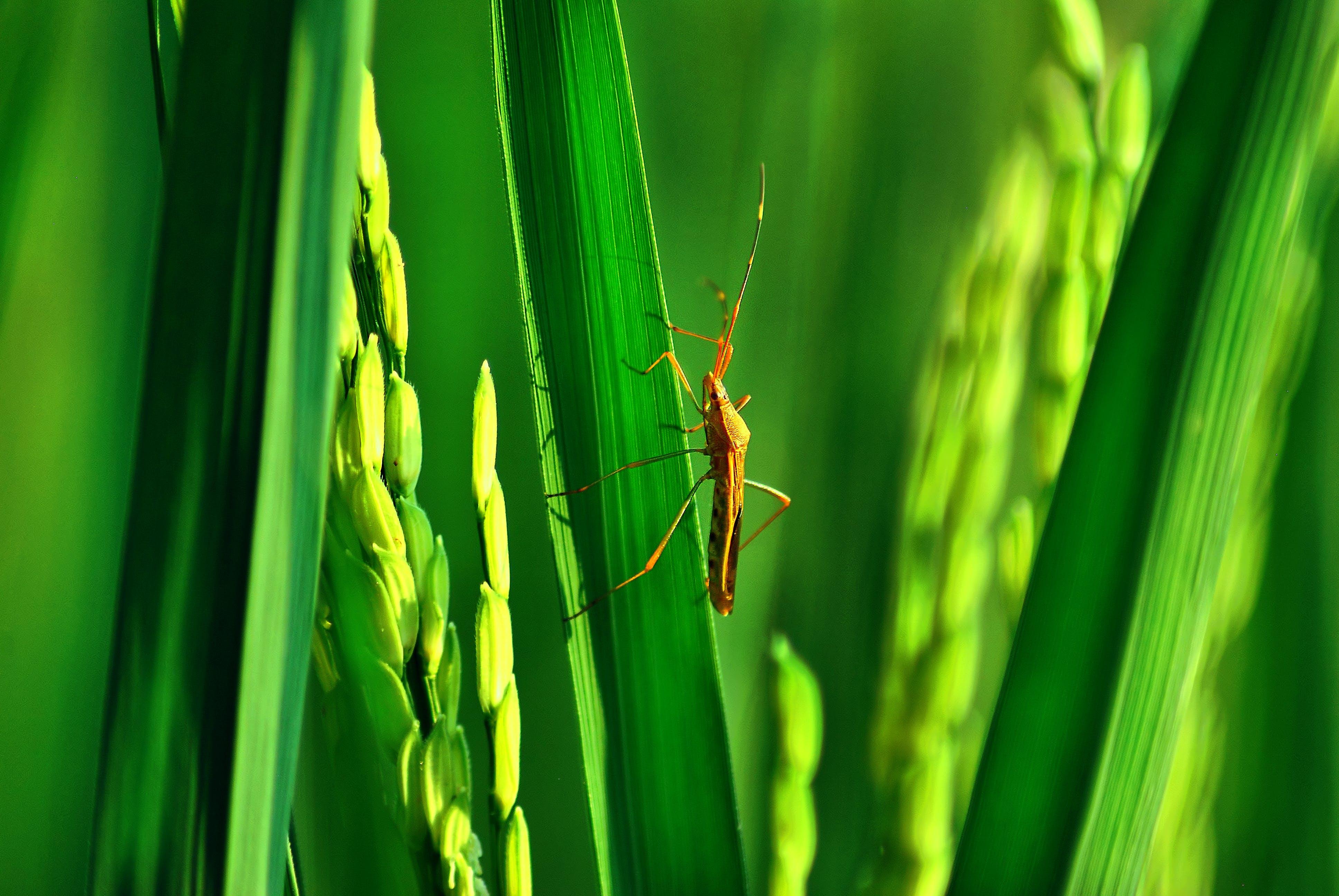 Free stock photo of amay, bekasi, bugs, green