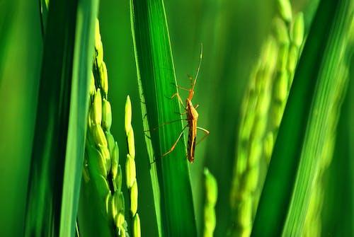 Бесплатное стоковое фото с amay, bekasi, жуки, зеленый