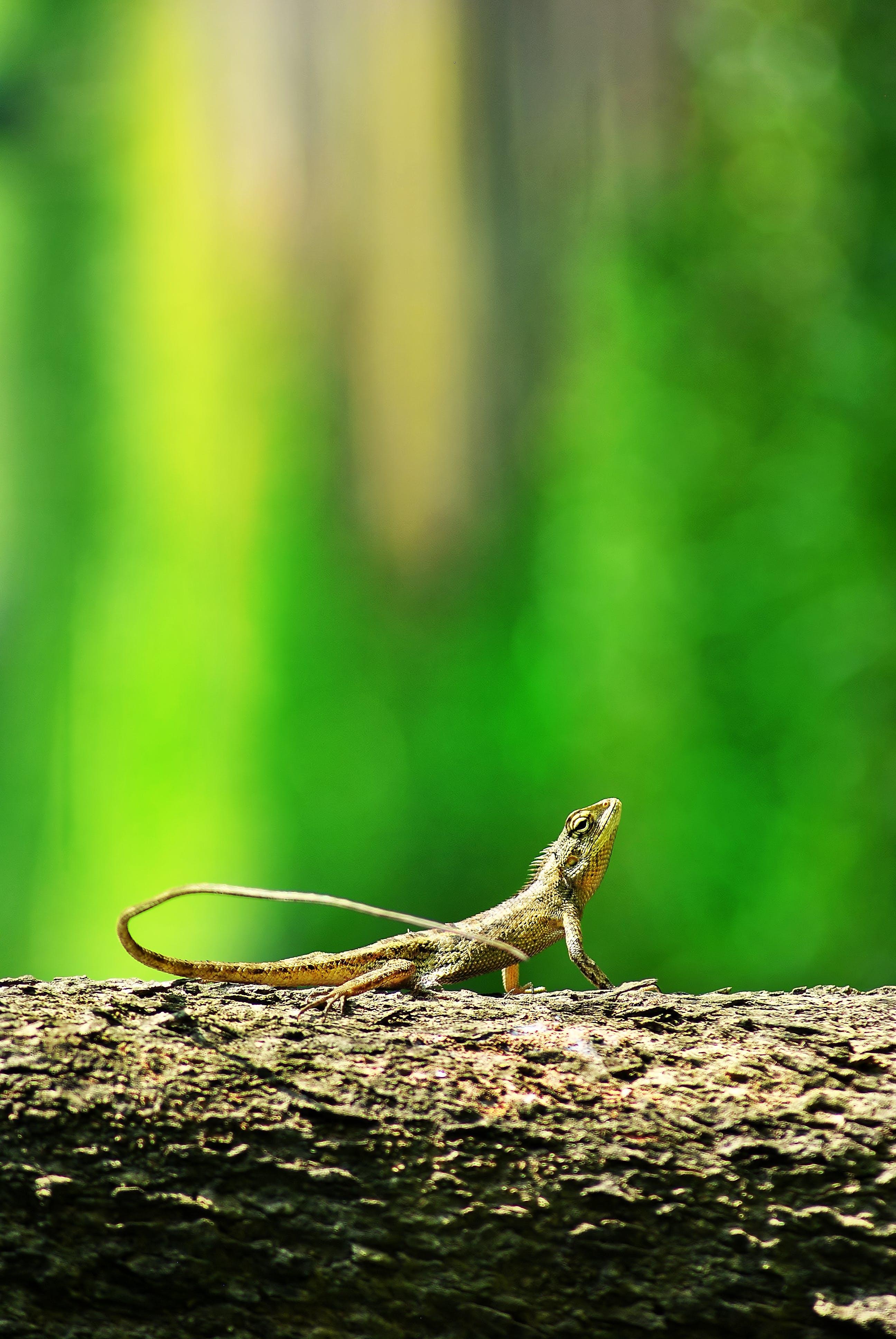 Free stock photo of amay, animal, bekasi, green