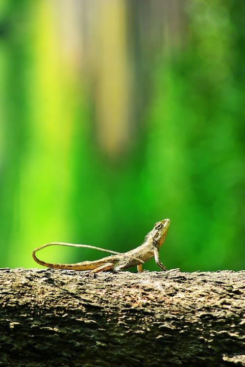 Бесплатное стоковое фото с amay, bekasi, дикая природа, дикий