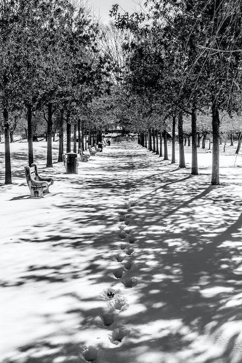 Бесплатное стоковое фото с деревья, скамейки, снег, ч-б