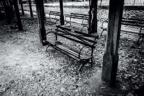 Free stock photo of b&w, benches, trellis