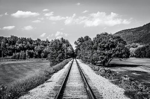 Free stock photo of b&w, nature, train, trees