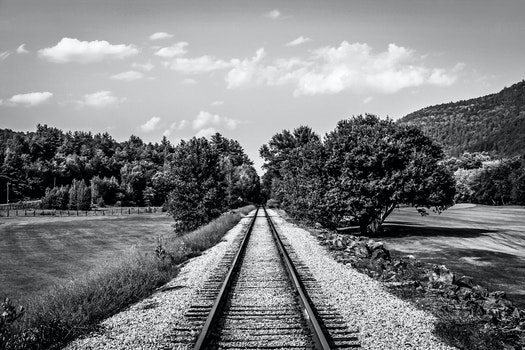 Free stock photo of nature, train, trees, b&w