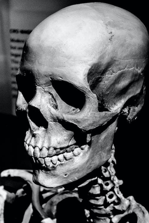 Foto stok gratis hitam & putih, manusia, potret, tengkorak