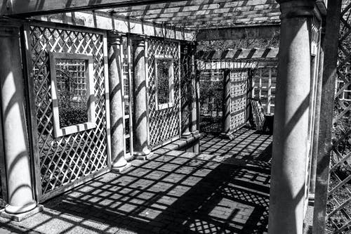 Foto stok gratis bayangan, cahaya, hitam & putih, kebun