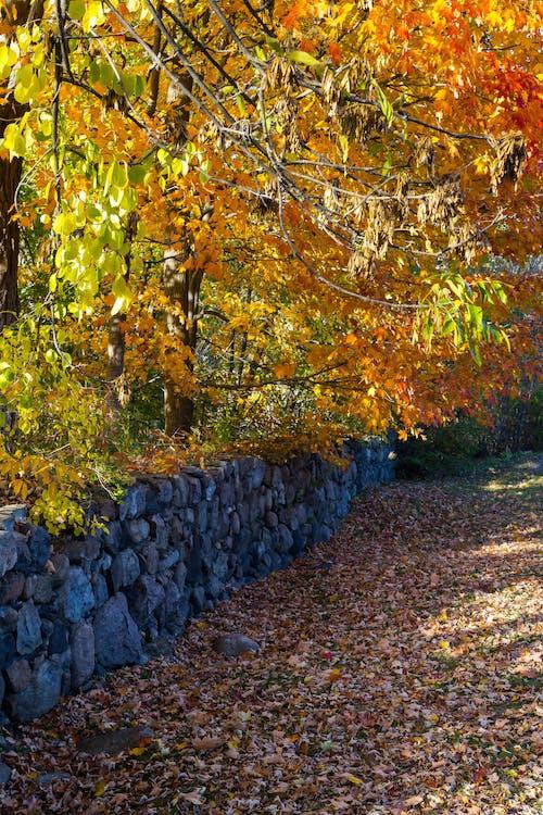 Foto stok gratis alam, batu, dinding, dinding batu