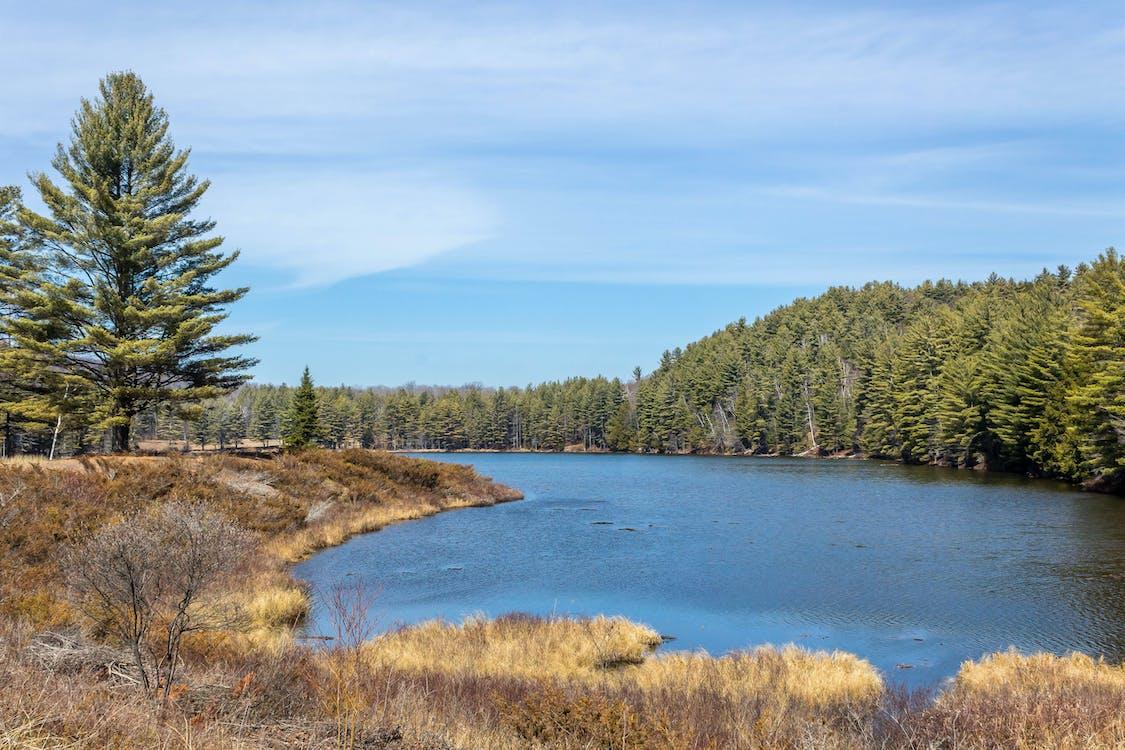 adirondack state park, Bear pond, conifer