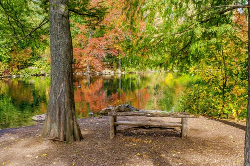 Free stock photo of bench, central park, nature, pond
