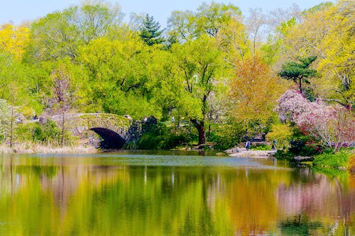 Free stock photo of bridge, central park, Gapstow Bridge, nature