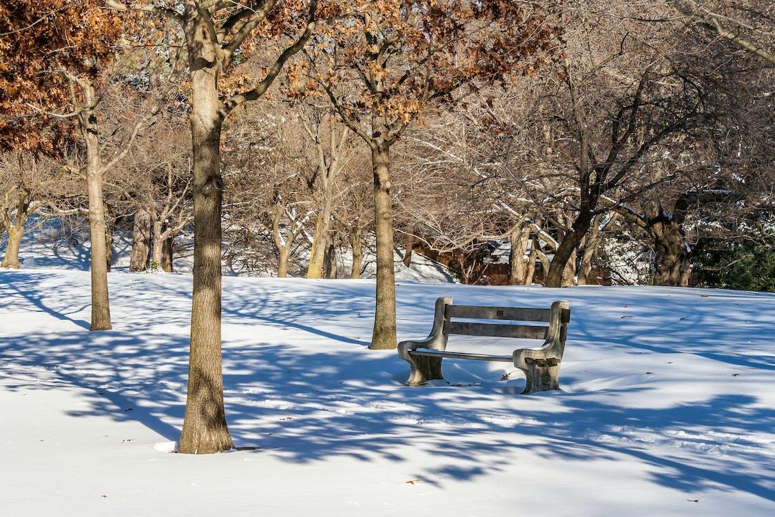 겨울, 그림자, 나무