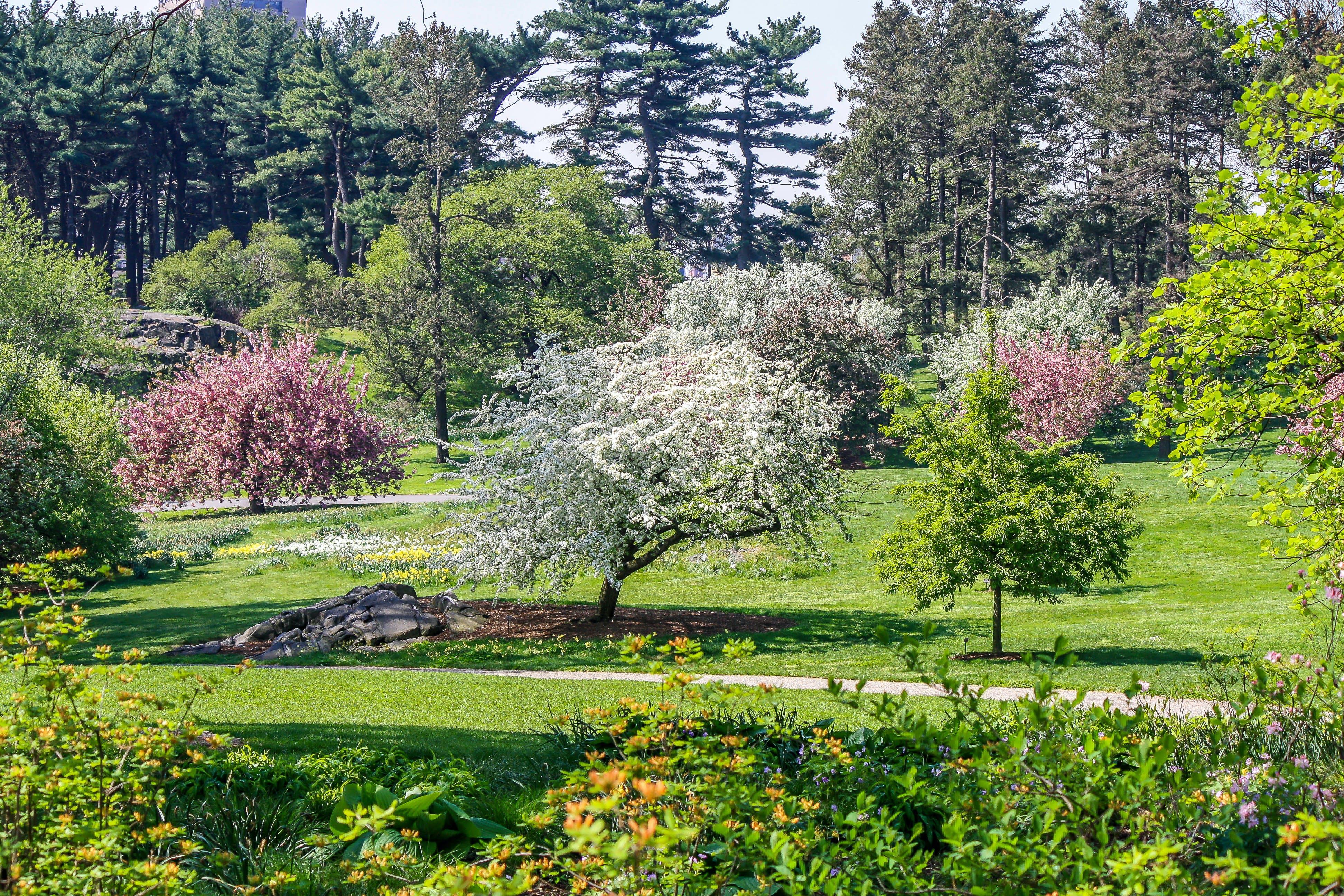 Free stock photo of bloom, flower, garden, grass