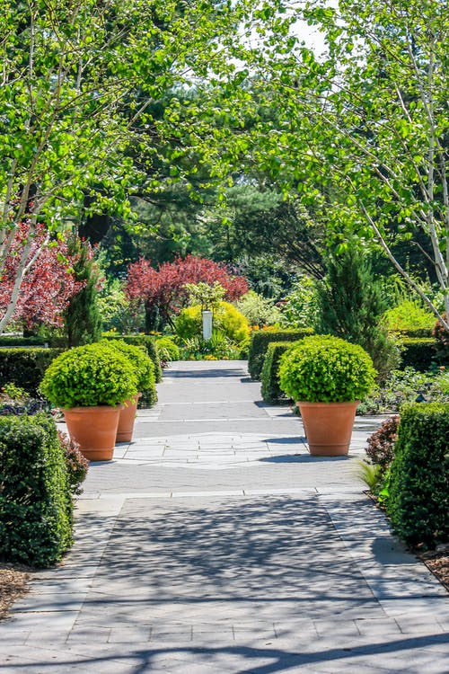Free stock photo of garden, nature, path, plants