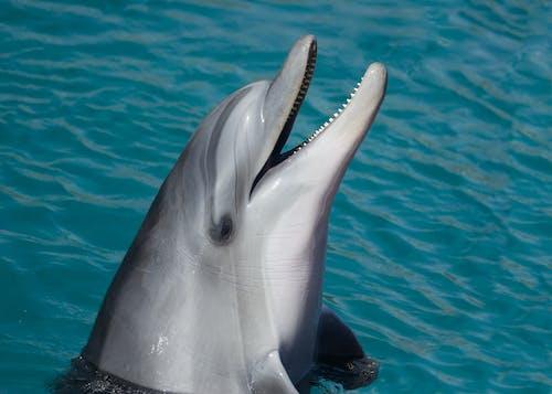 Ilmainen kuvapankkikuva tunnisteilla delfiini, eläin, eläintarha, fiksu