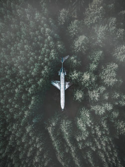 White Airliner in Forest