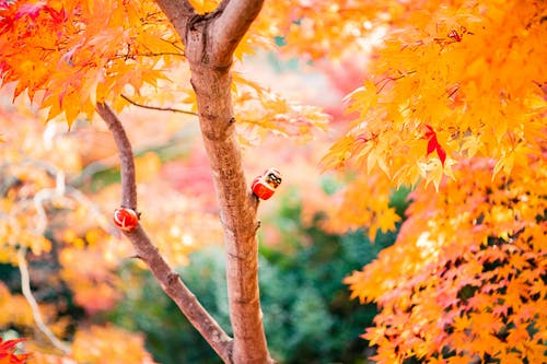 Orange-Leafed Tree