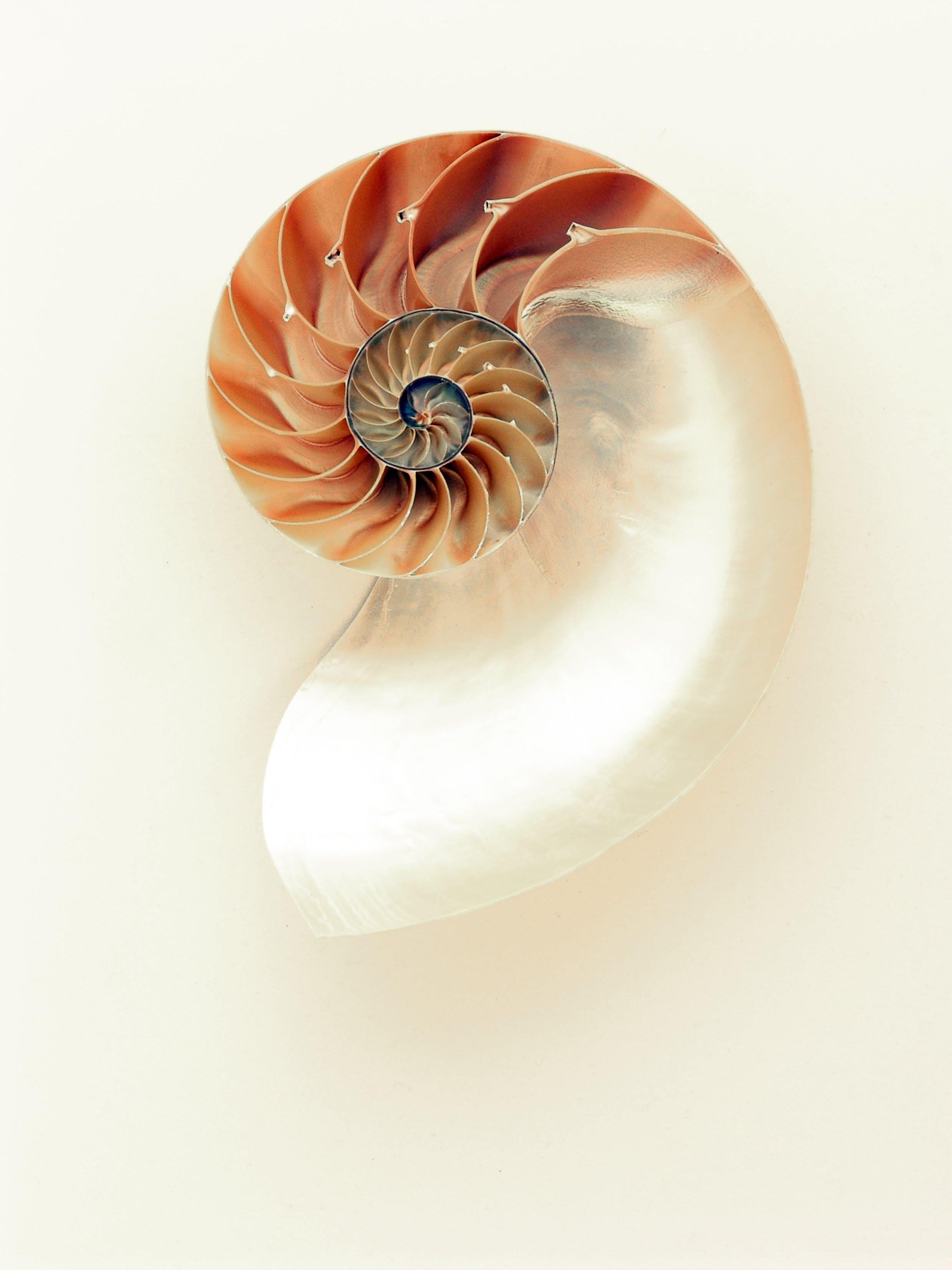 Orange and White Seashell on White Surface