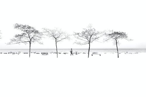 Gratis lagerfoto af alene, hvid, landskab, morgengry