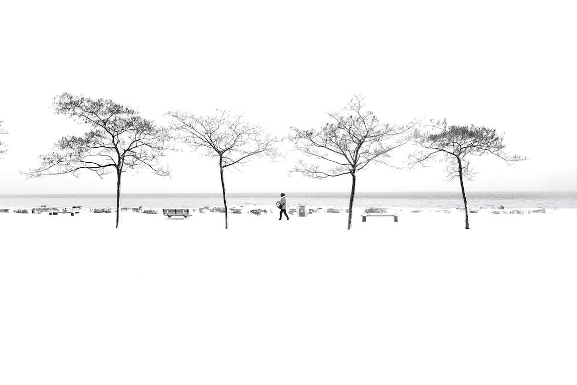 Person Walking Near Trees