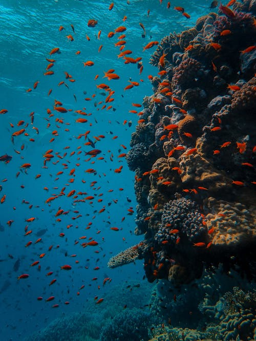 Underwater Photography of School of Fish