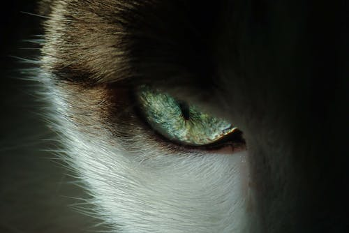 Close-Up Photo of Cat's Eye