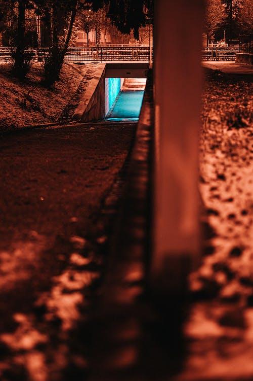 Free stock photo of dark, lights, neon, night